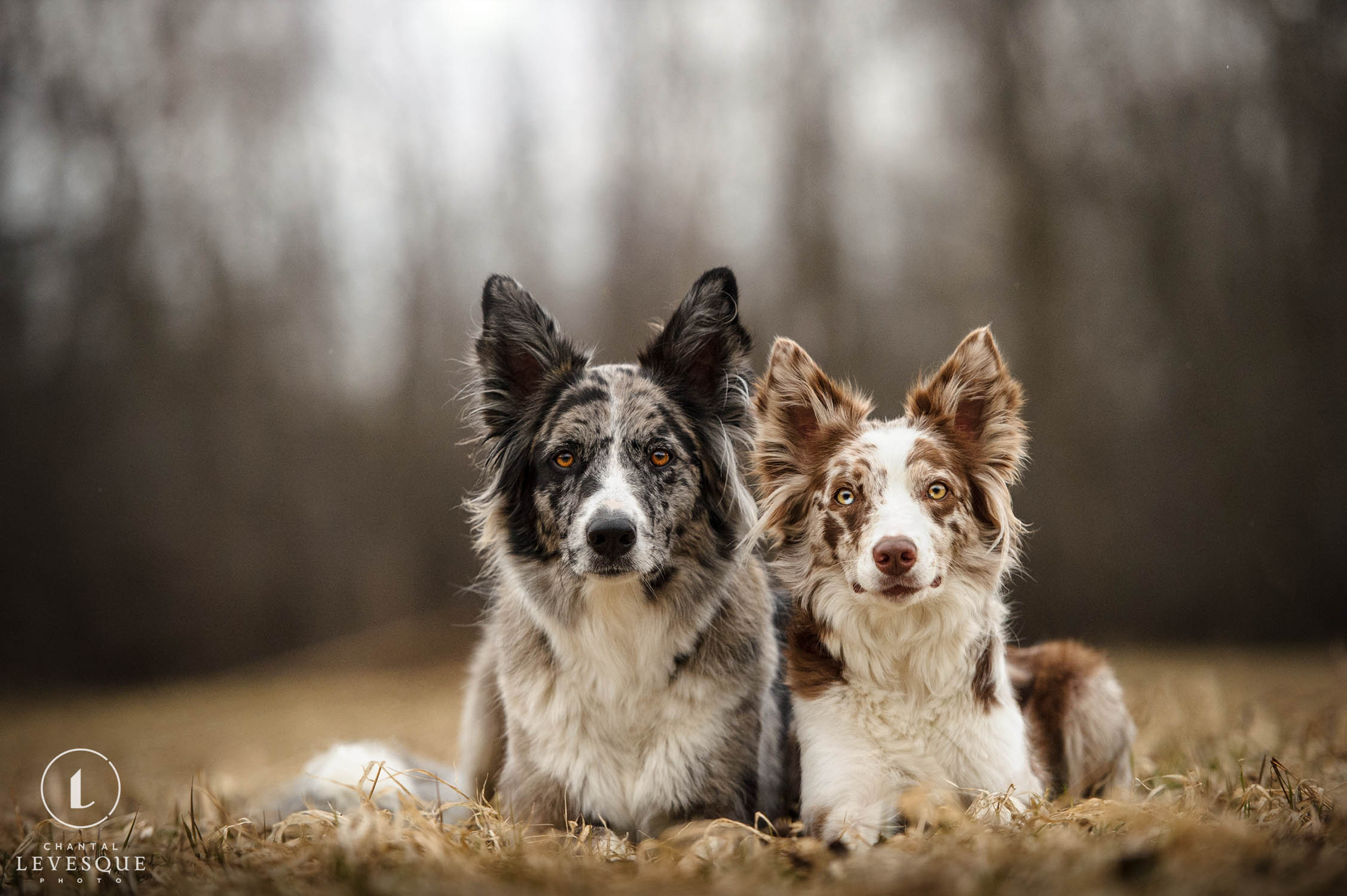 two-dogs-portrait-montreal-photography.jpg