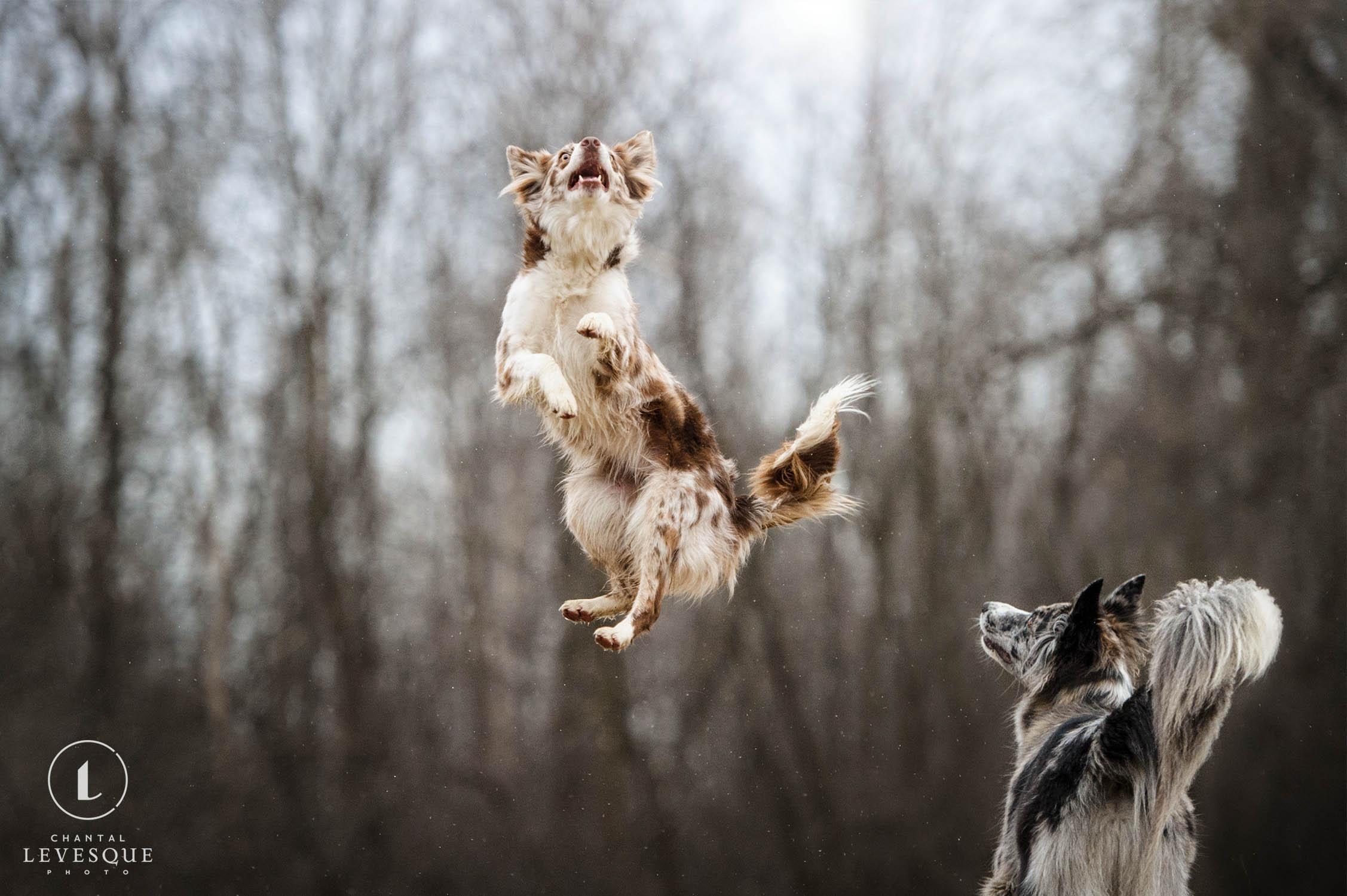 jumping-dog-photo.jpg