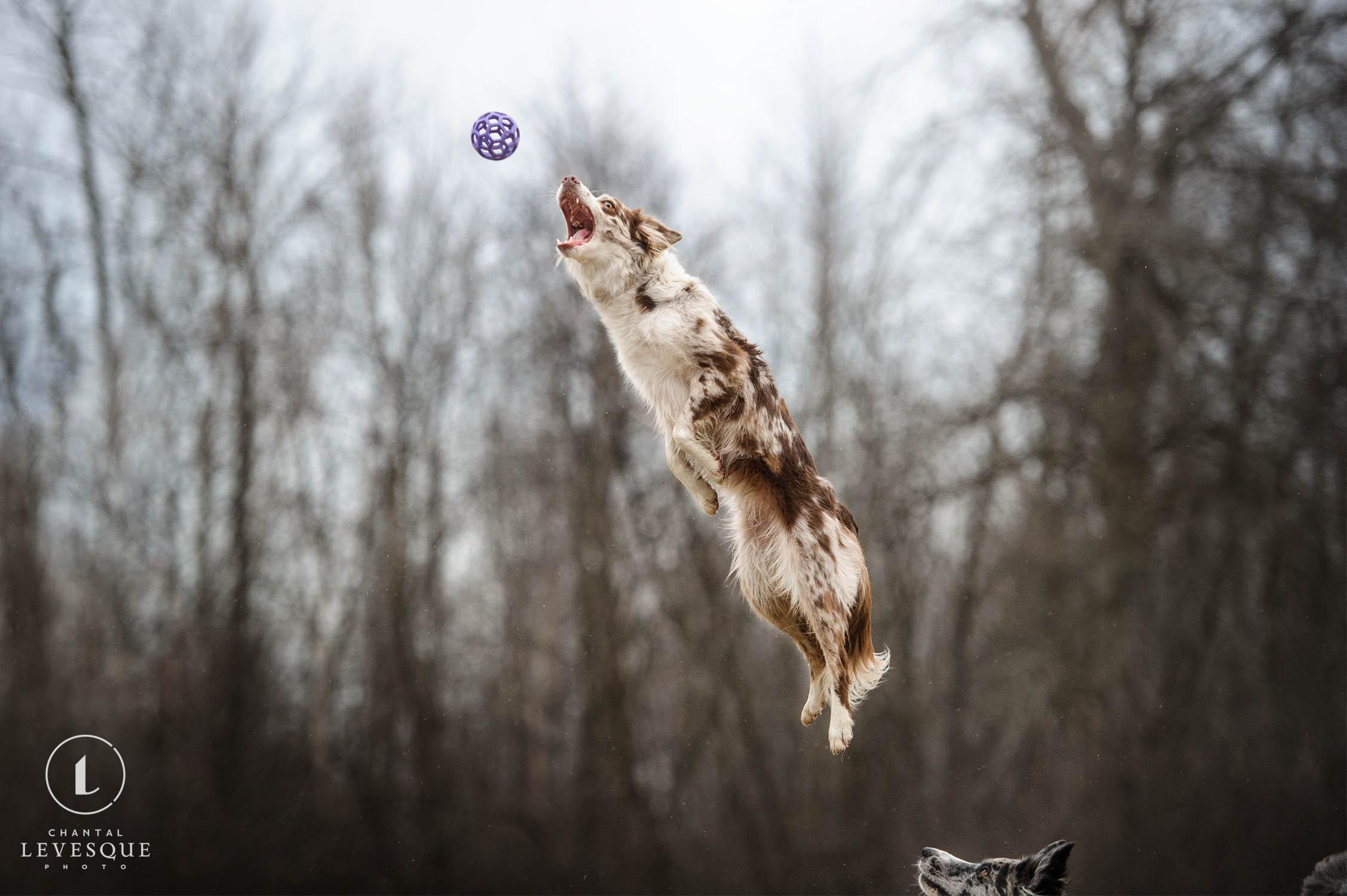 dog-jump-ball.jpg