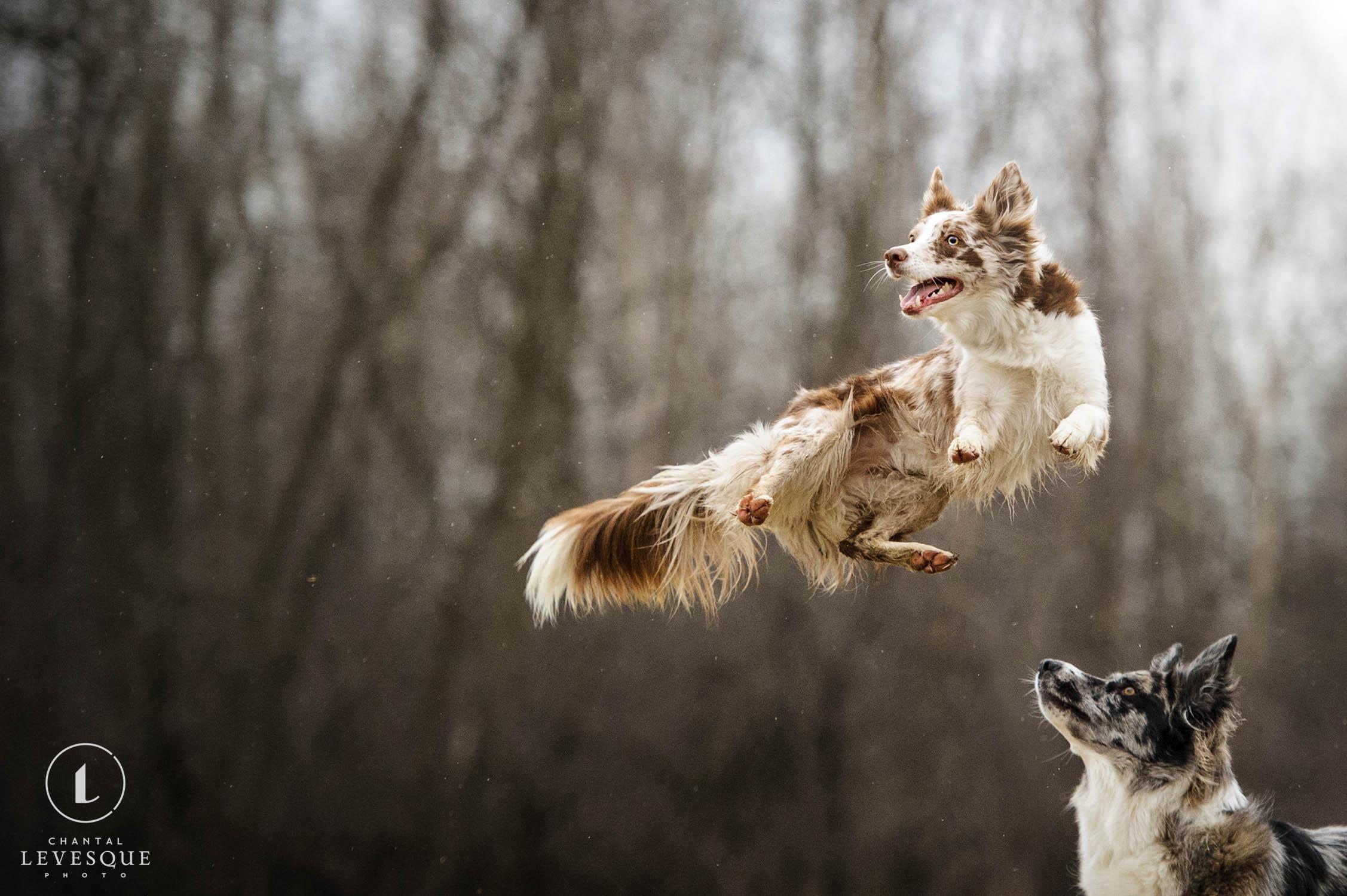 happy-dog-jump.jpg