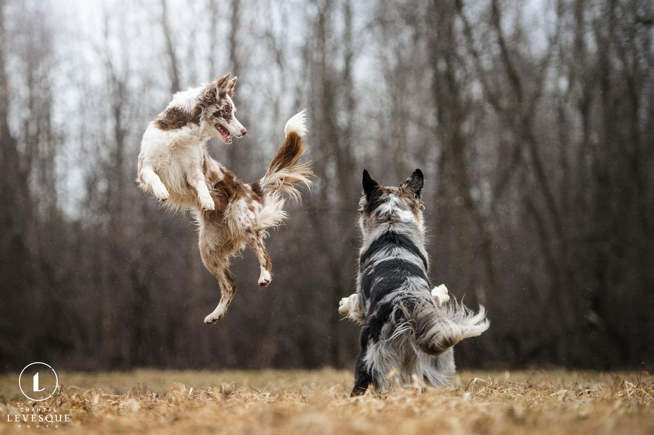rockstar-dogs.jpg