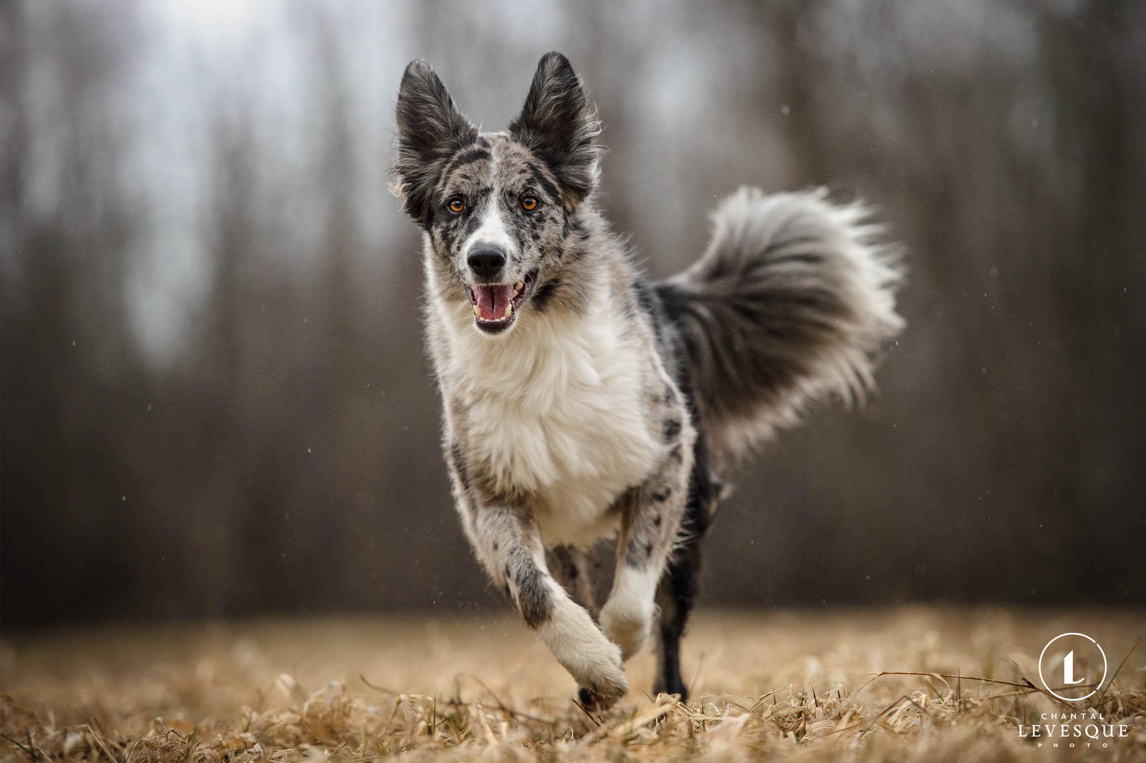 happy-dog-running.jpg