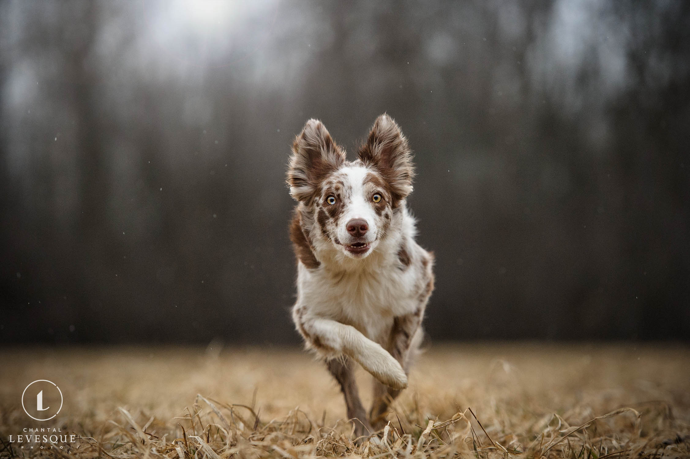 curious-dog-running.jpg