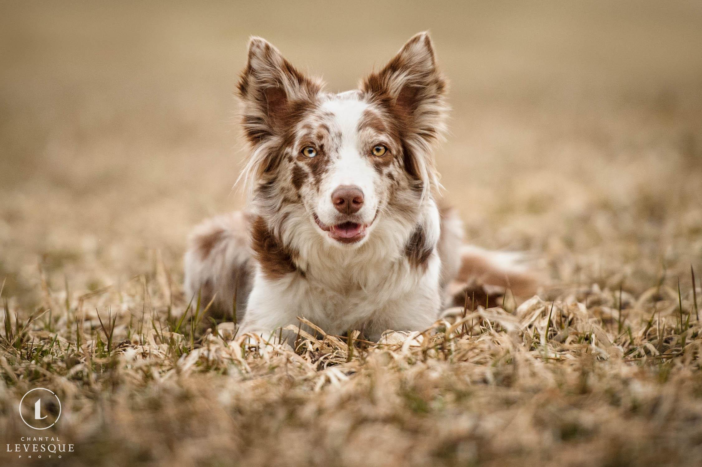 happy-dog-relaxing.jpg