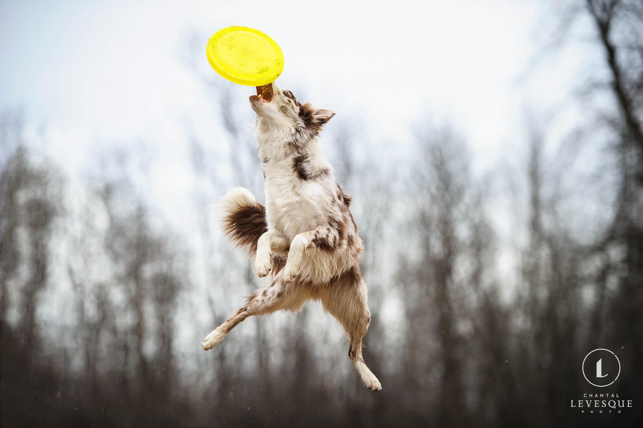 dog-catch-frisbee.jpg