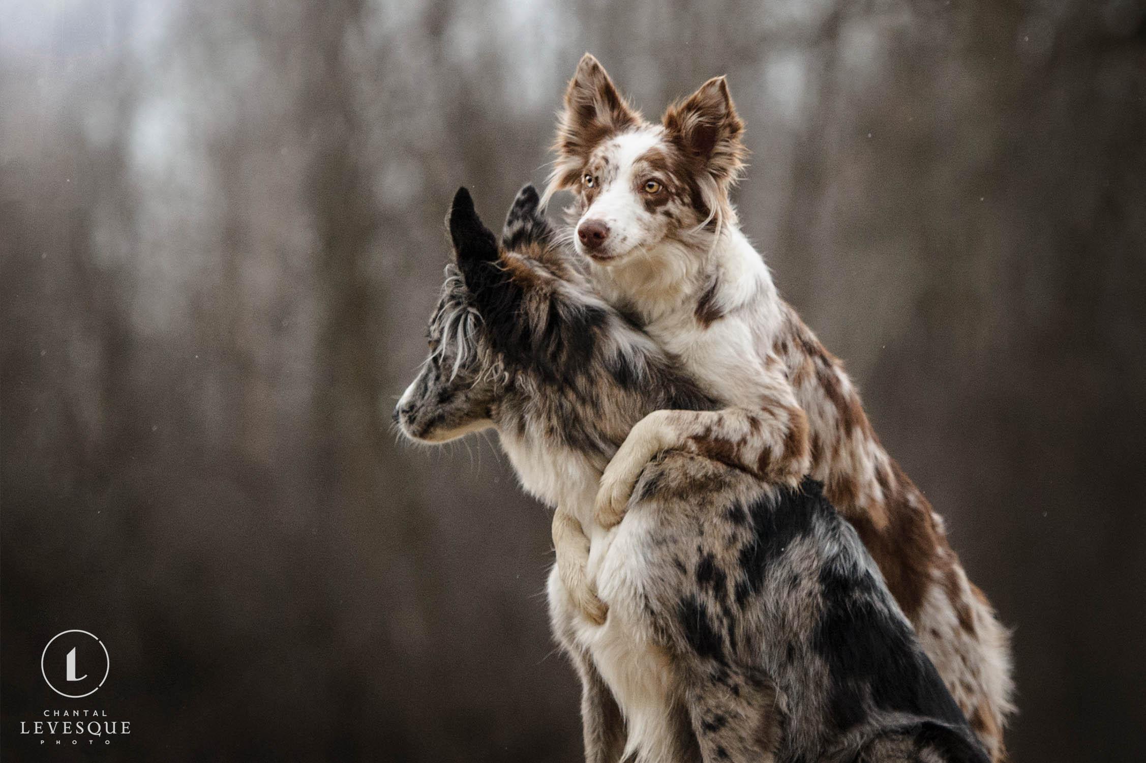 dogs-hugging.jpg