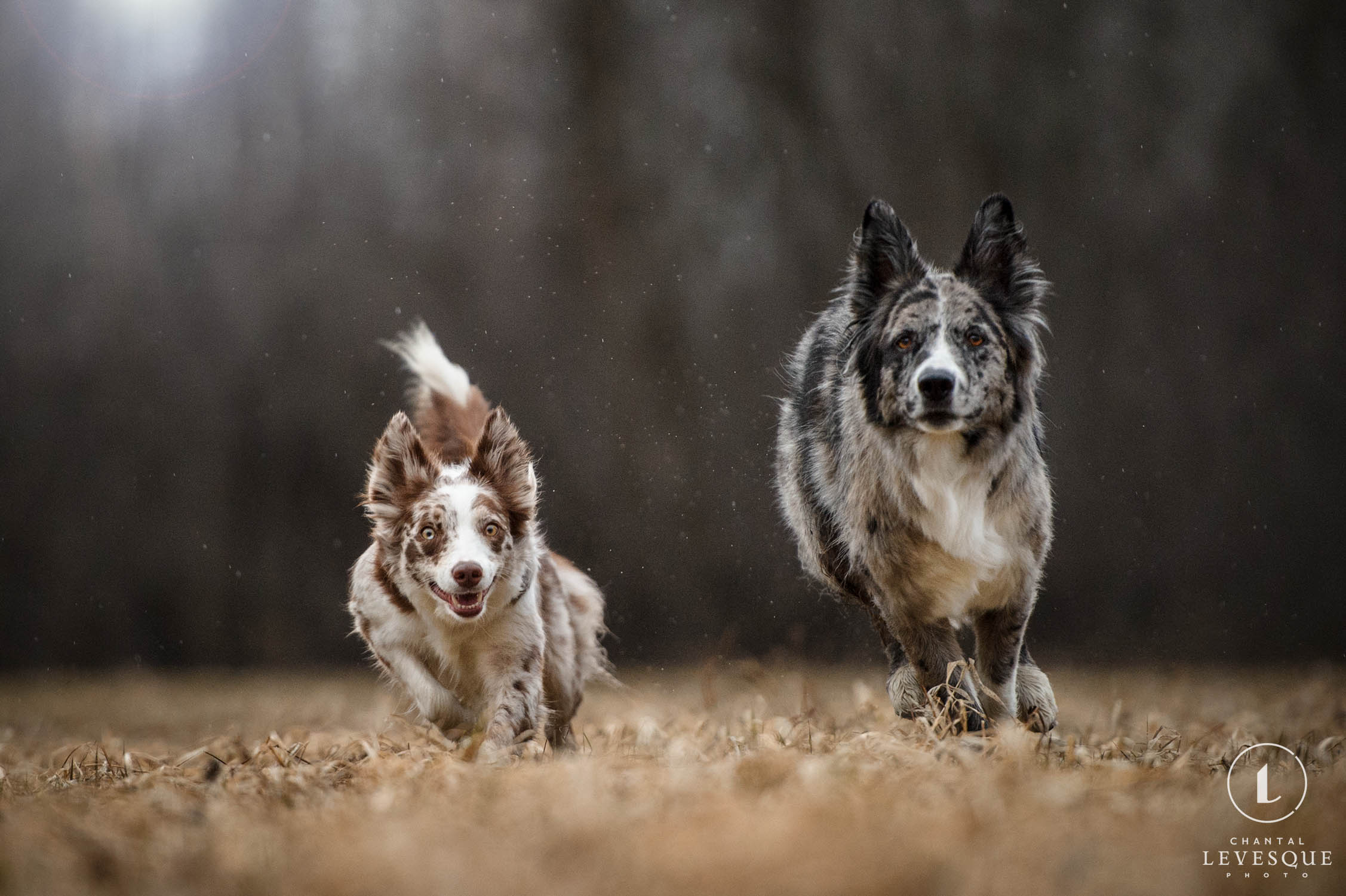 two-dogs-running.jpg