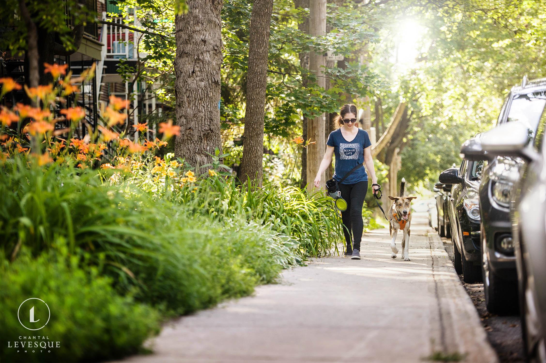 dog-walking-montreal