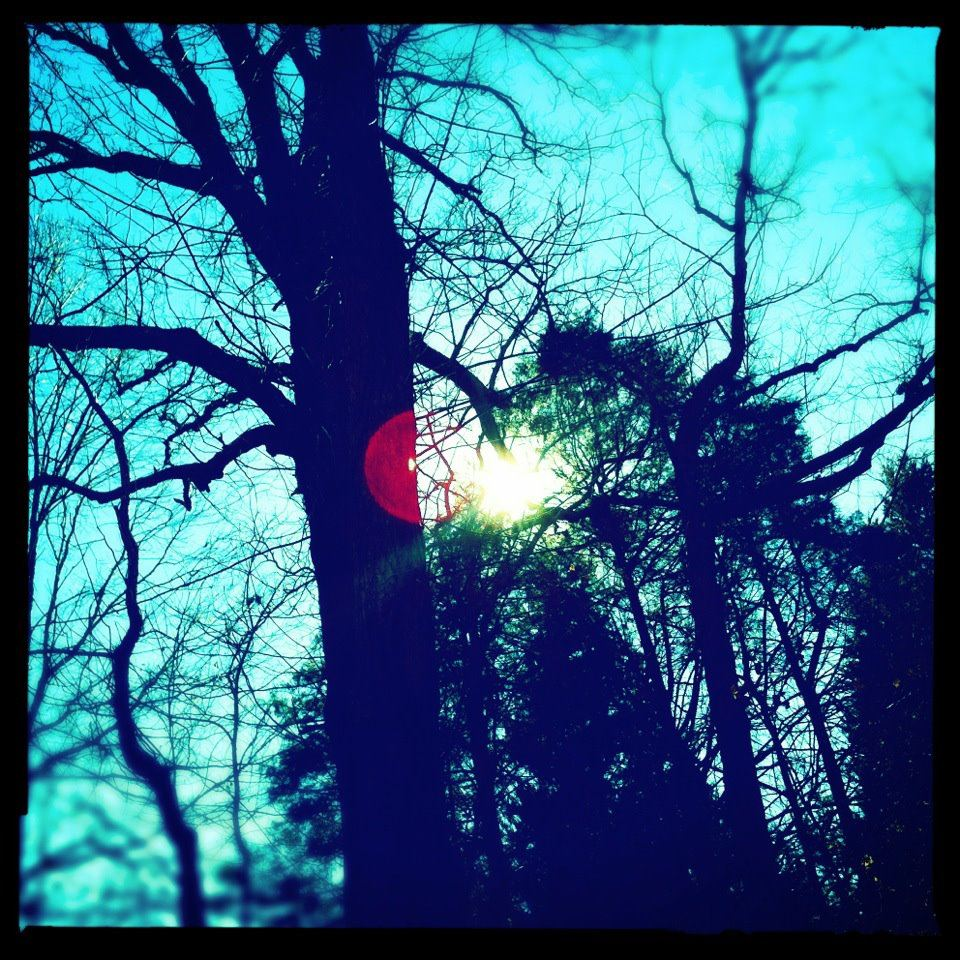 iPhone (2013). An example of my fascination with trees, late day sunlight and sky. Taken in East Nashville, TN one cold winter afternoon.