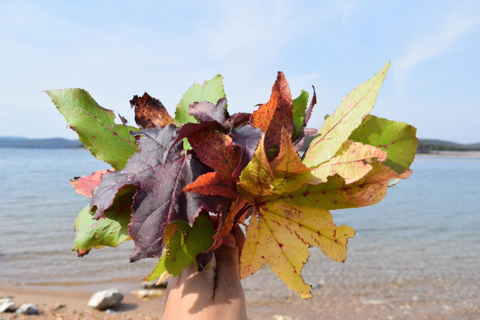 Fall leaves and Beaver Lake