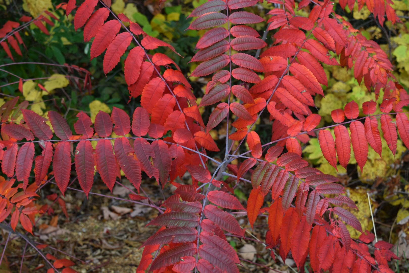 Fall Flowers Arkansas