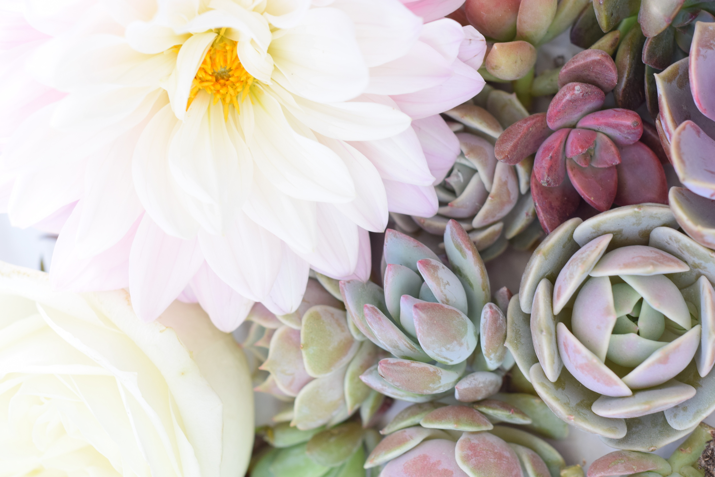 Houston Succulents and Dahlias, Wedding and Event