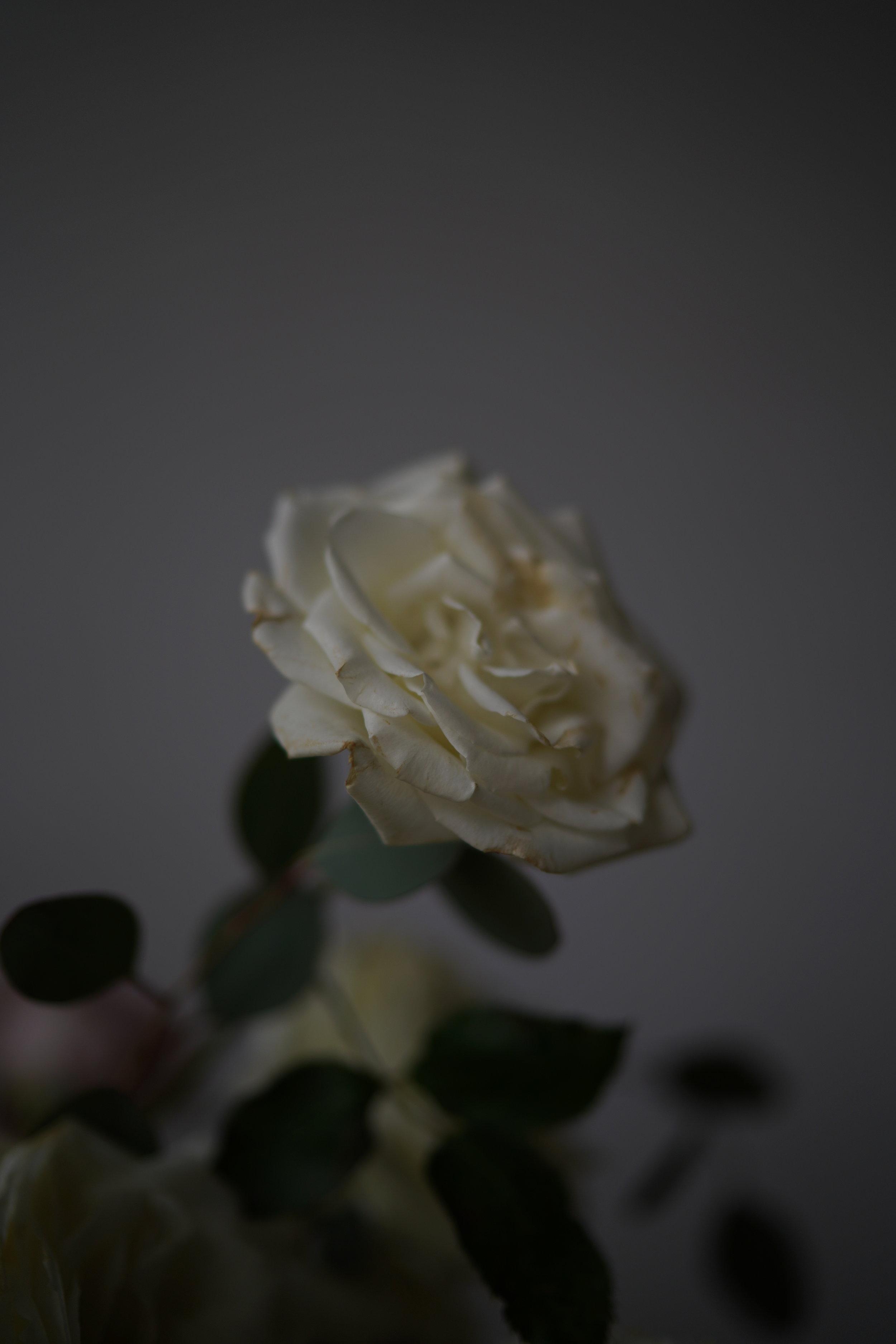 Rose_Photography_Houston_Styling.JPG