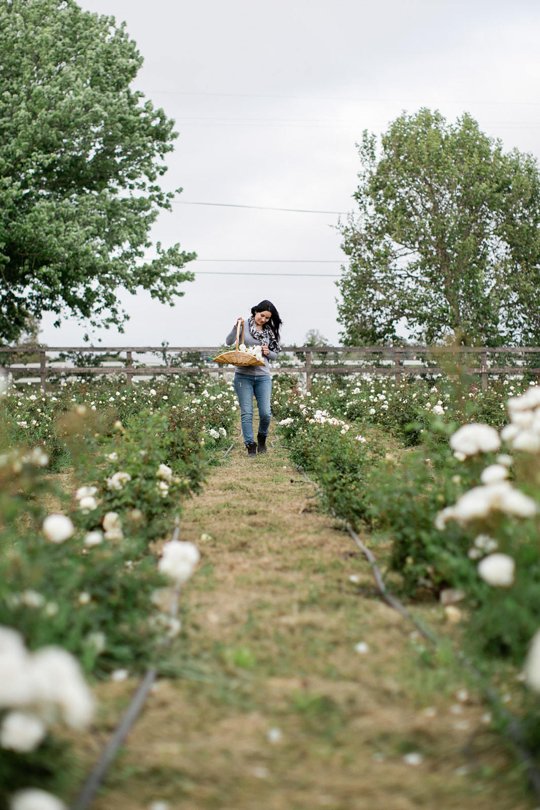 Dreamy_Flower_Farm_San_Ynez_California_Maria_Maxit.jpg