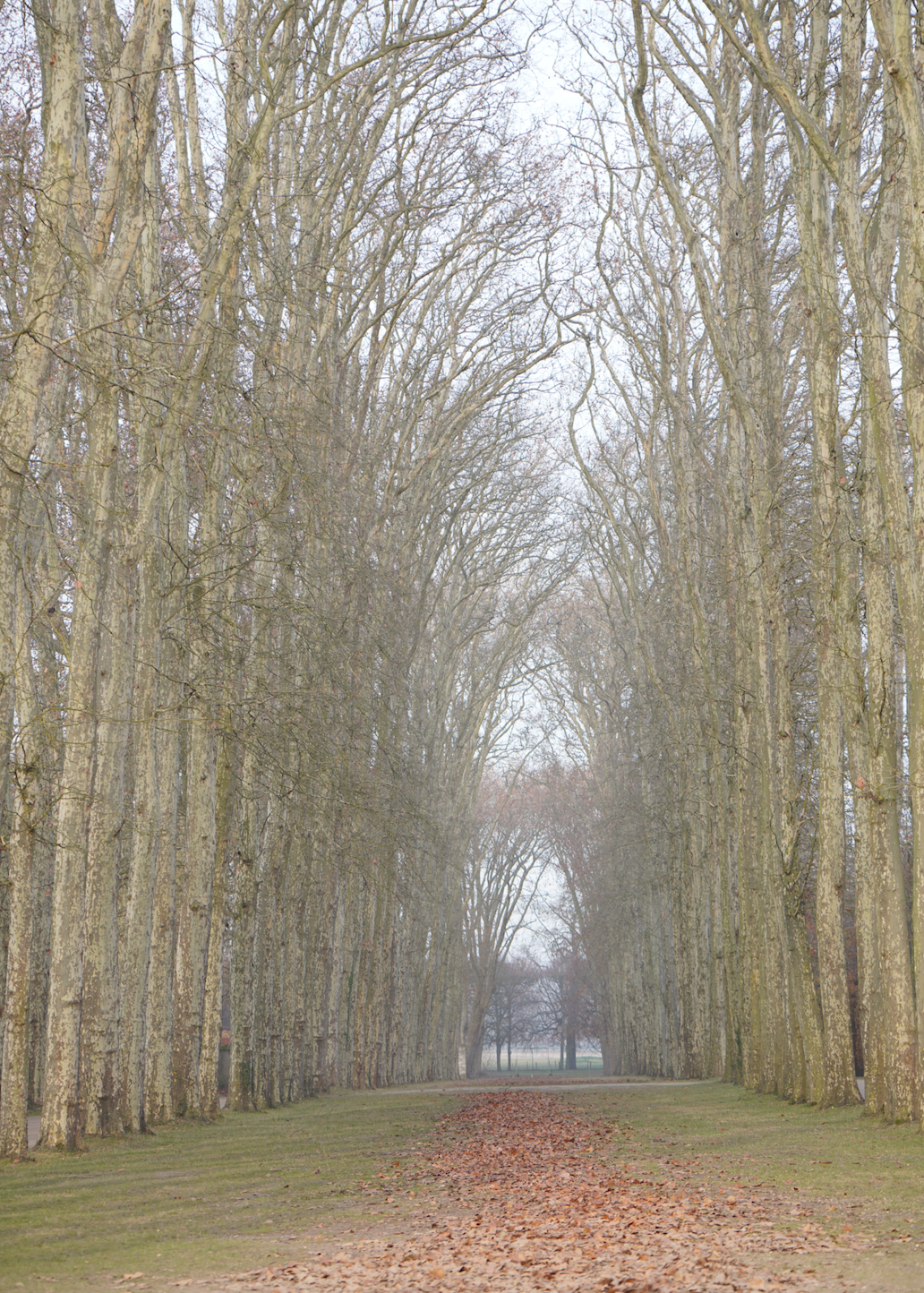 Versaille-Maxit-Photographer-Trees.png