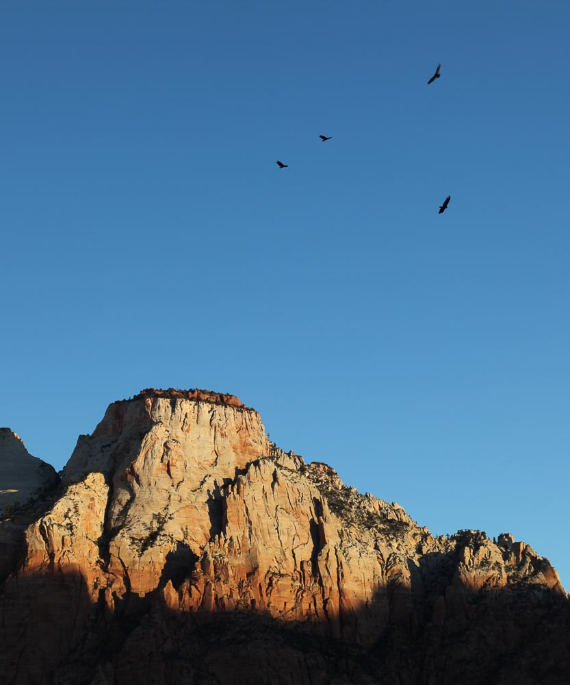 The Sentinel, Zion National Park, UT