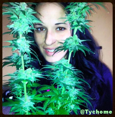 trychome.girlsthatgrow