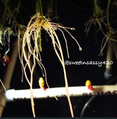 Screen Shot 2014-04-28 at 8.43.00 PM.png
