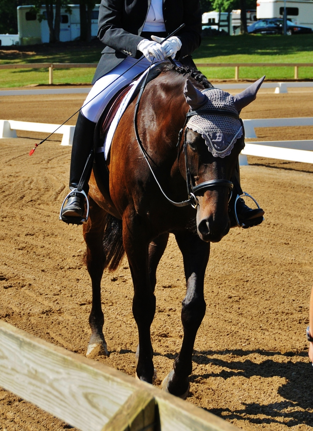 Noble after finishing a test at a horse show.