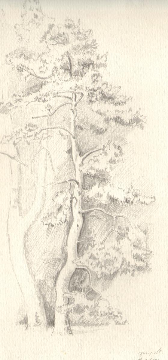 1971_risba_drevesa__1.jpg