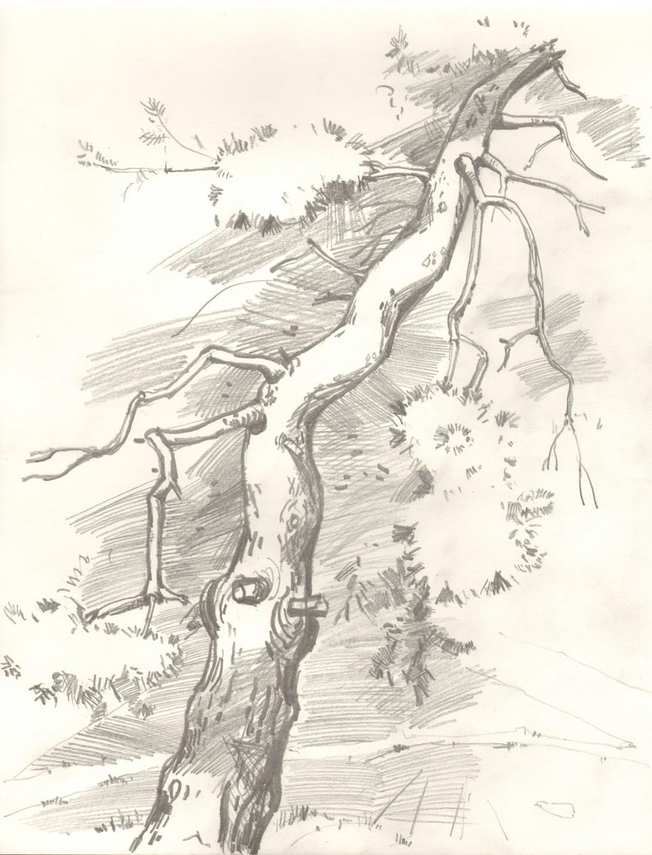risba_drevesa_5.jpg