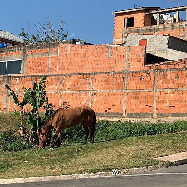 The horse by Cae's grandmother's house is unimpressed with the corner supermarket's daily sales. #plantbased #imgood