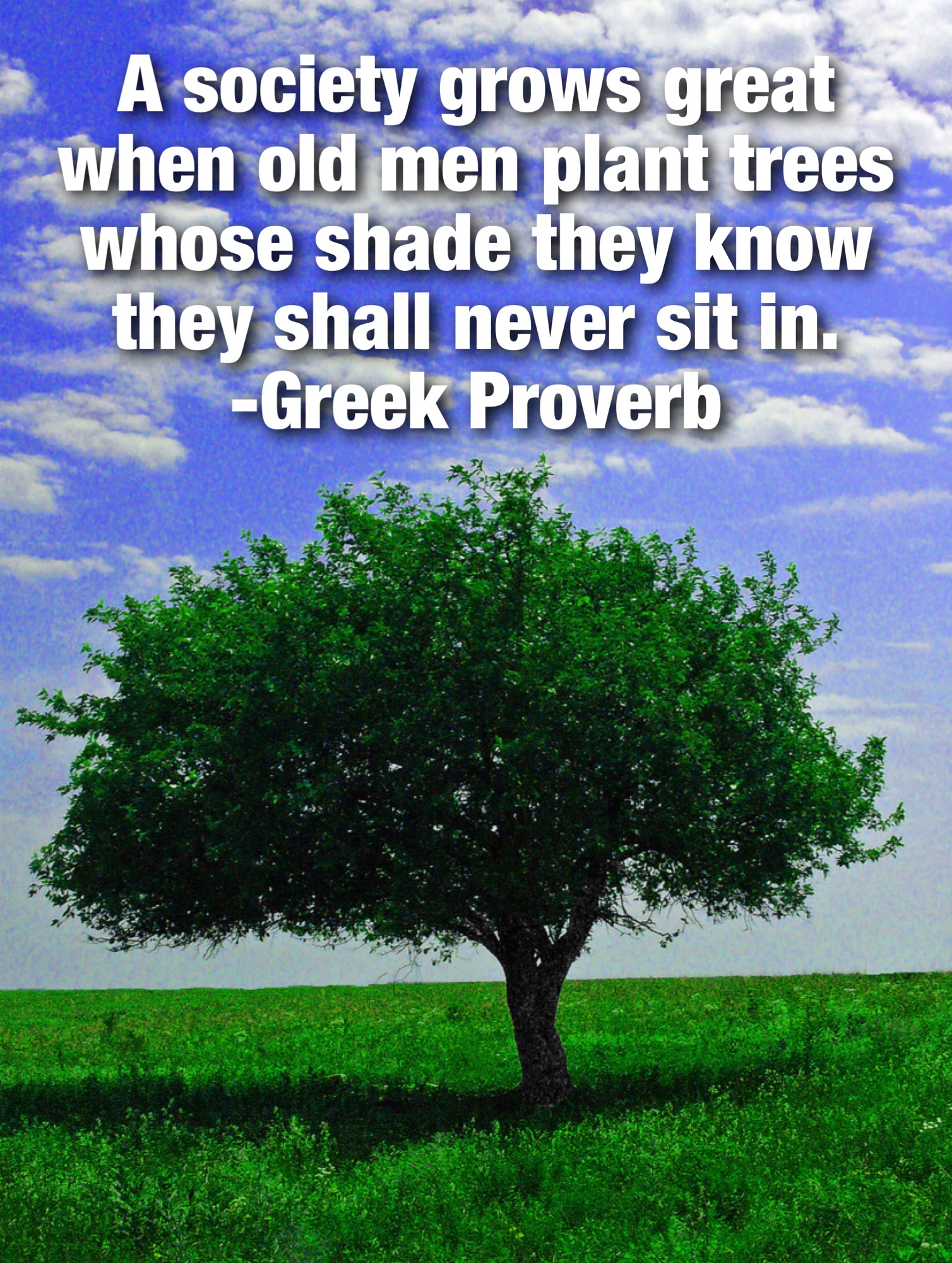 shade tree proverb.JPG
