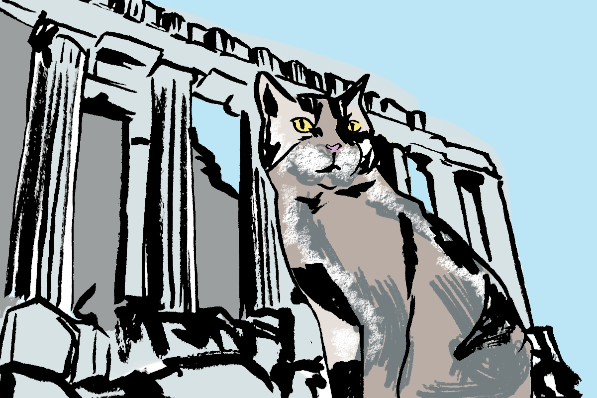 catroy.png