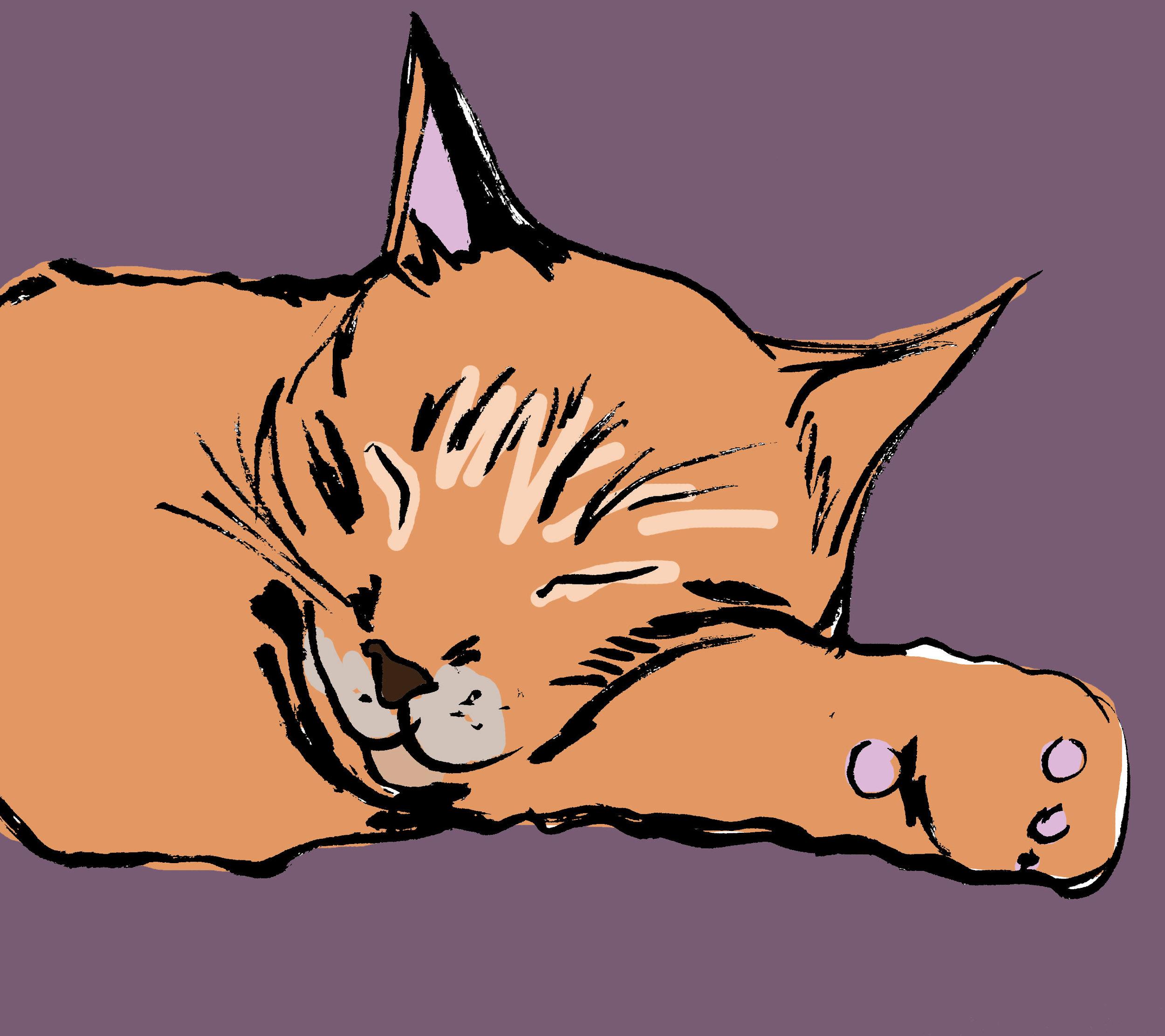 dreamingcat.jpg