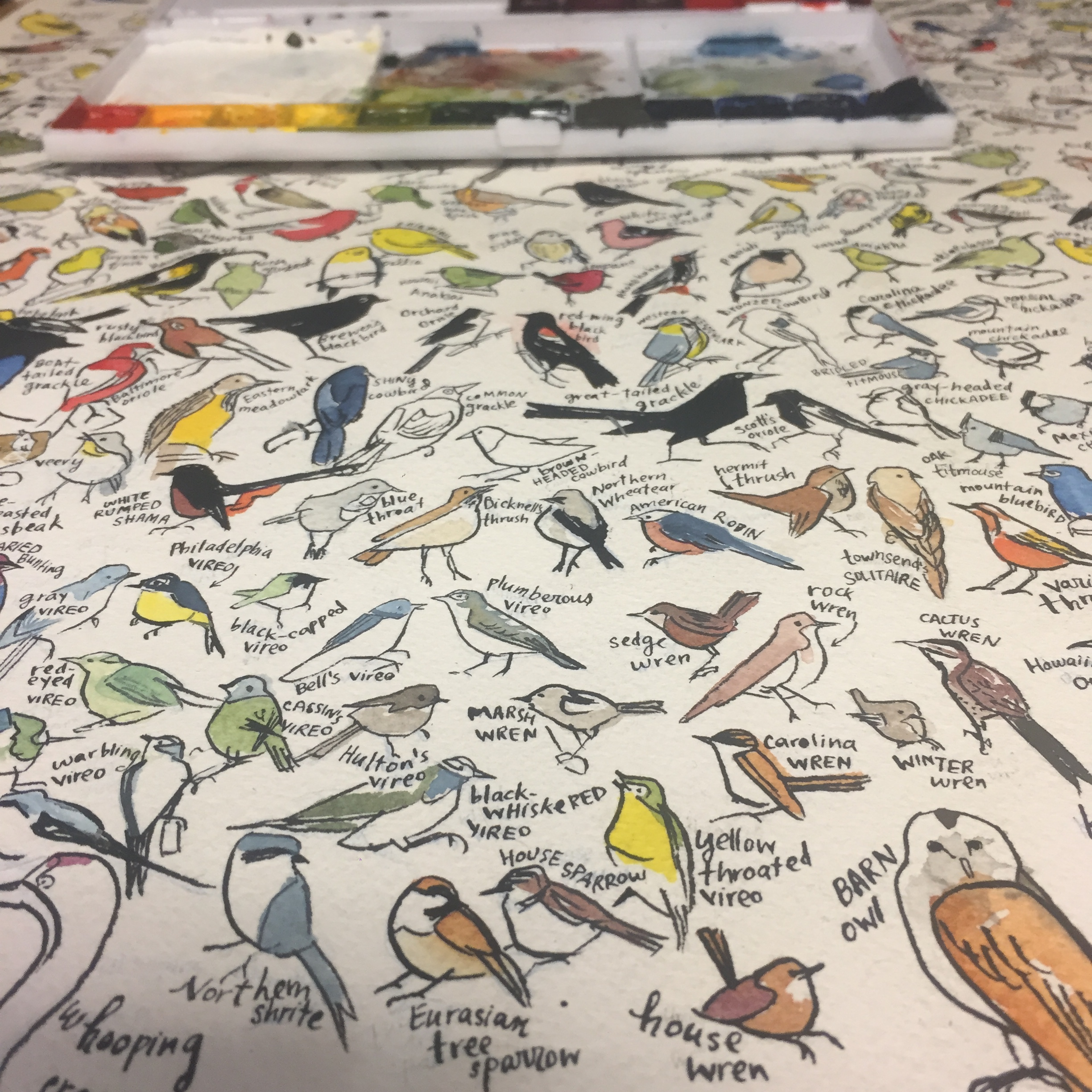 The coloring begins! Note the palette in the background; see note at the end for more on it. A grackle in this image hasn't been filled in yet; can you find it?
