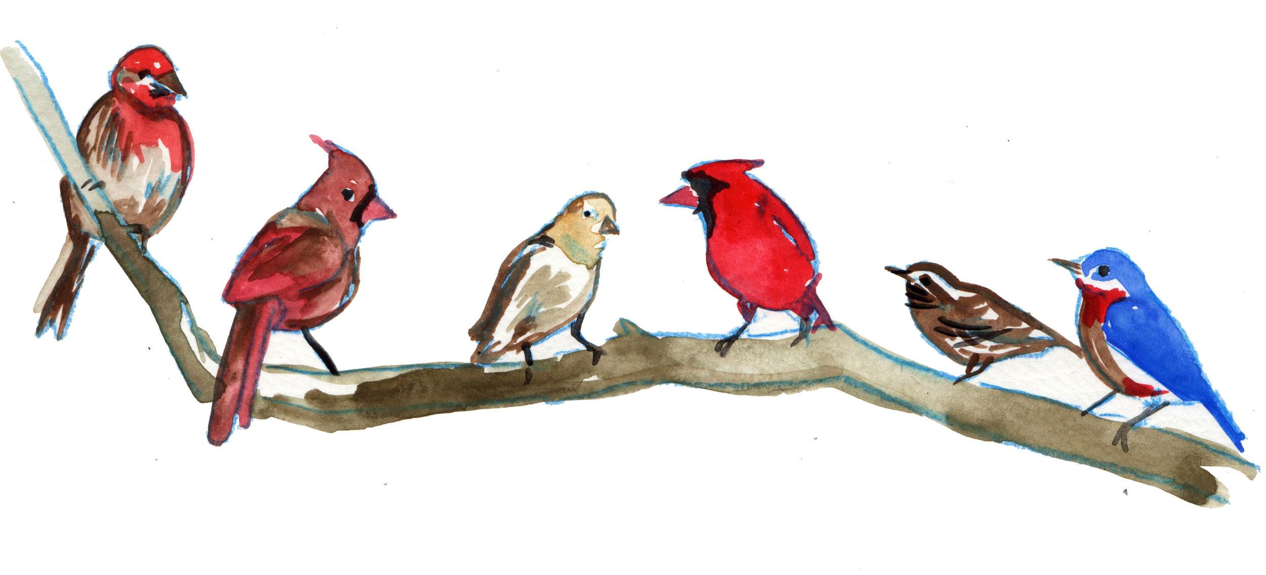 otherbirds.jpg