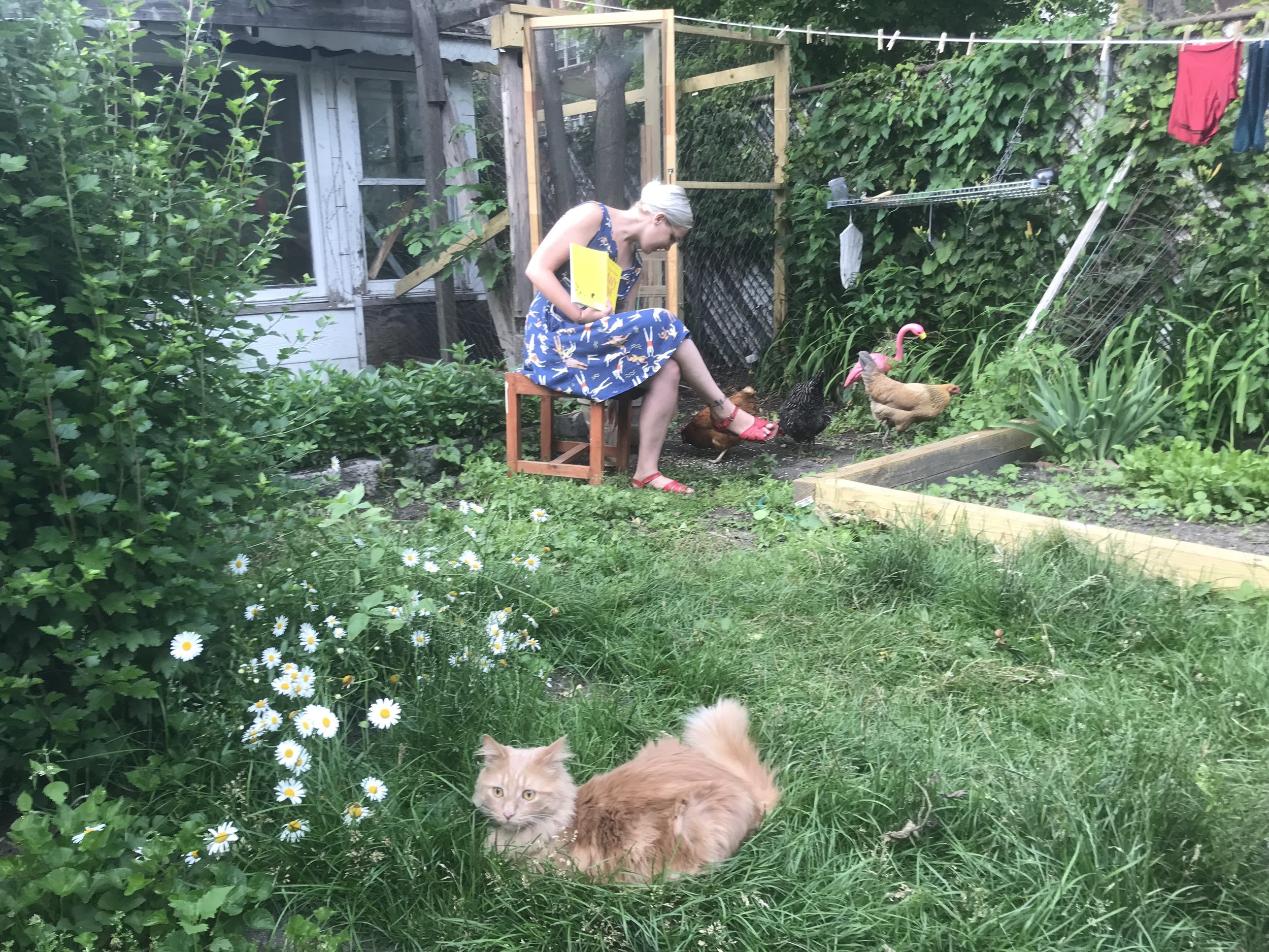 Here I am reading the book to the chickens. The chickens found several errors.