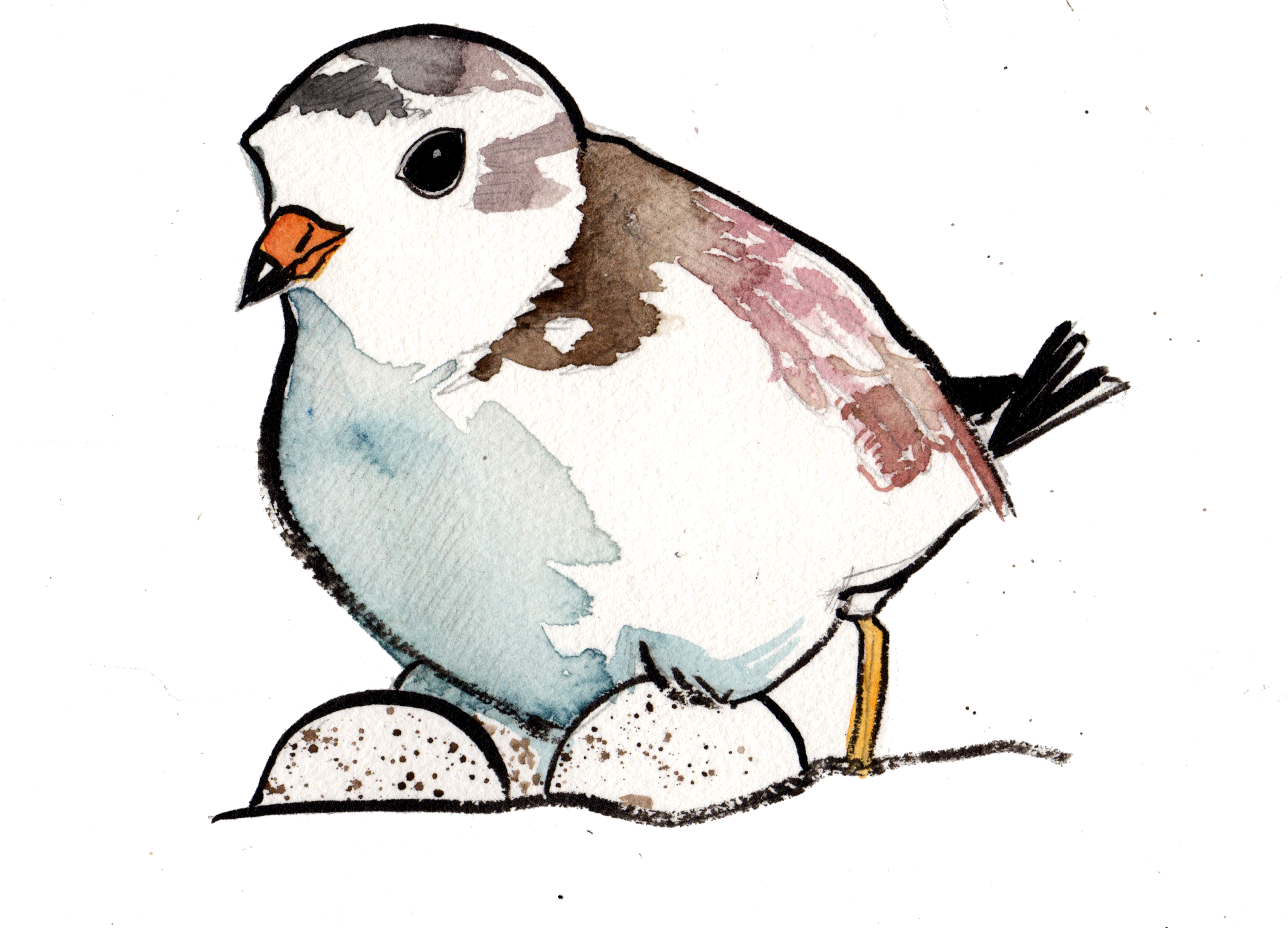 plover4.png