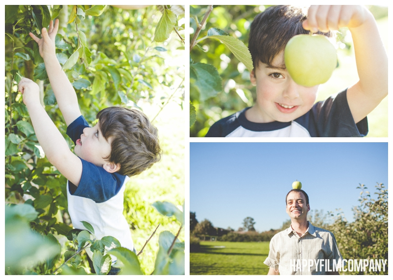 little boy picking apples - Seattle Family Apple Picking Photo Shoot - the Happy Film Company