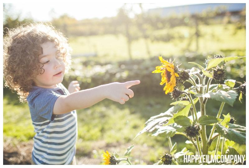 little boy sunflower photo  - Seattle Family Apple Picking Photo Shoot - the Happy Film Company