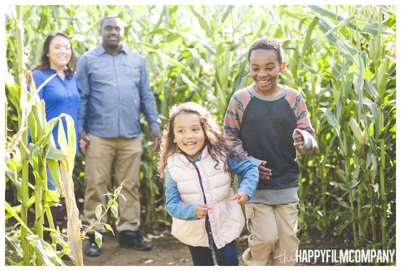 kids running through corn maze - Seattle Family Holiday Photos - The Happy Film Company - Seattle Family Portraits in Corn Maze