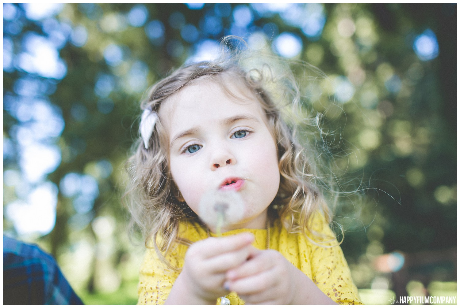 Little girl holding the dandelion- the Happy Film Company - Seattle Family Photography