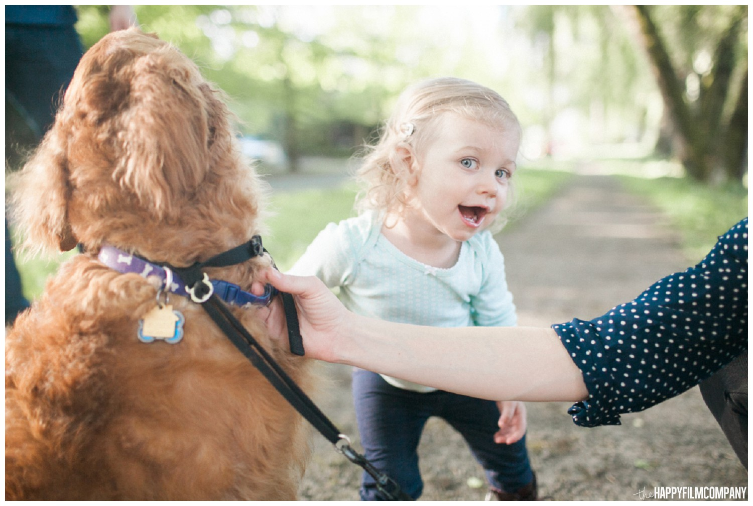 Little girl playing with the cute dog - the Happy Film Company - Seattle family Photos