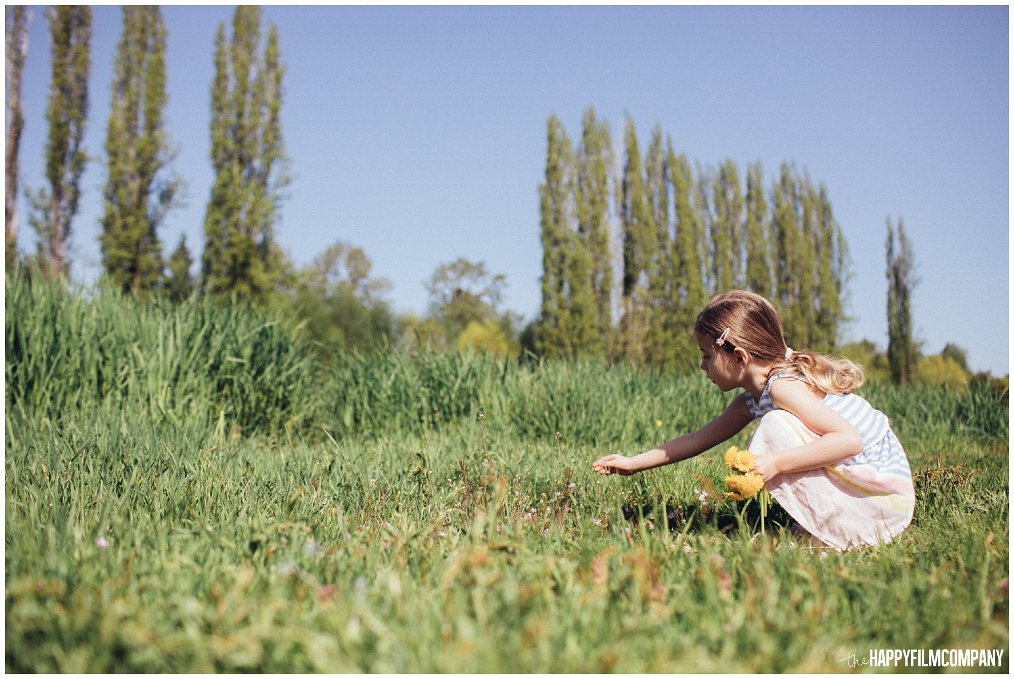 the Happy Film Company - Seattle Family Photography - Father Daughter Portraits - Redmond Grass Field Dandelion little girl picking flowers