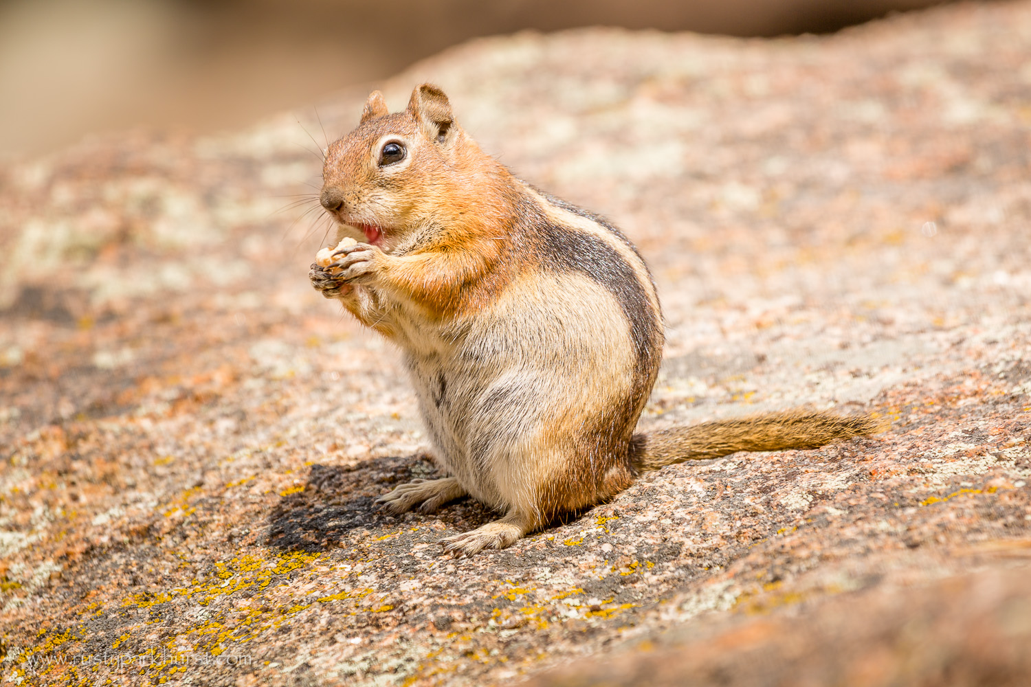 Chipmunks (or are they ground squirrels?) were abundant along the trail and at the lake.