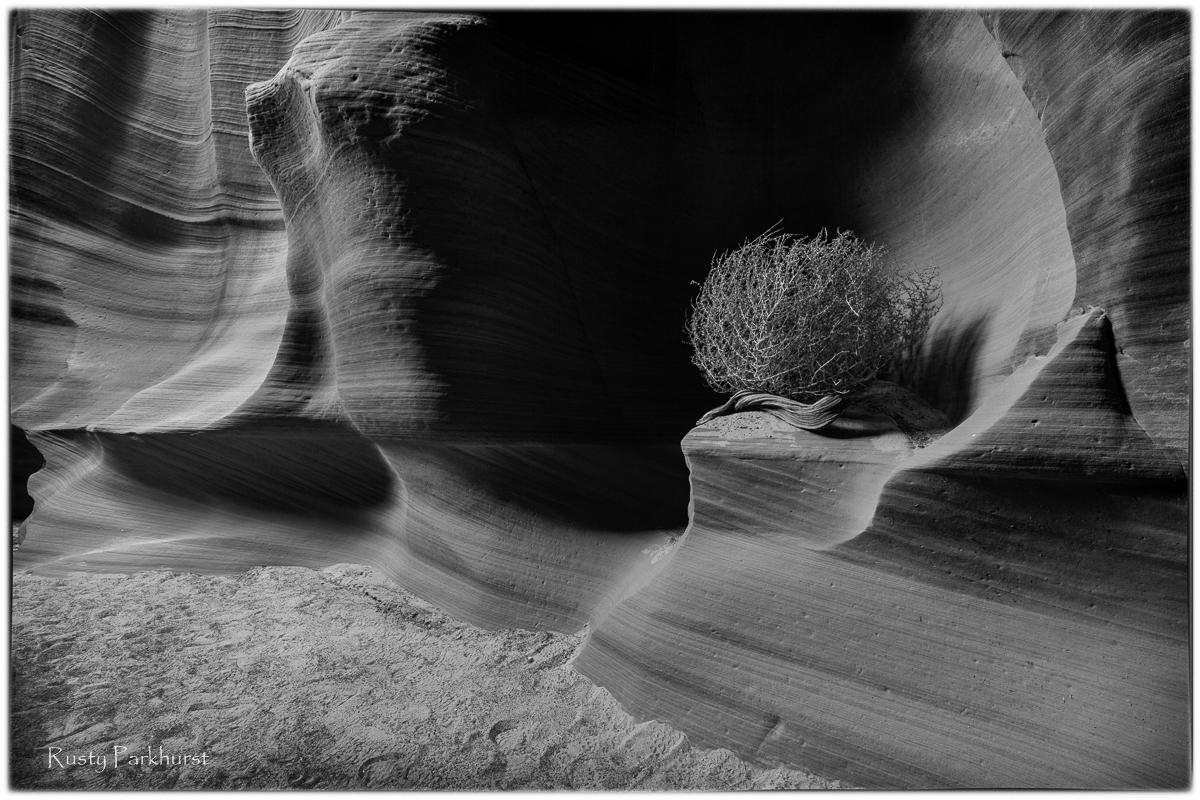 Canyon X Monochrome