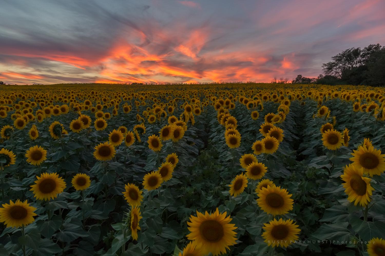 Grinter Farms Sunset