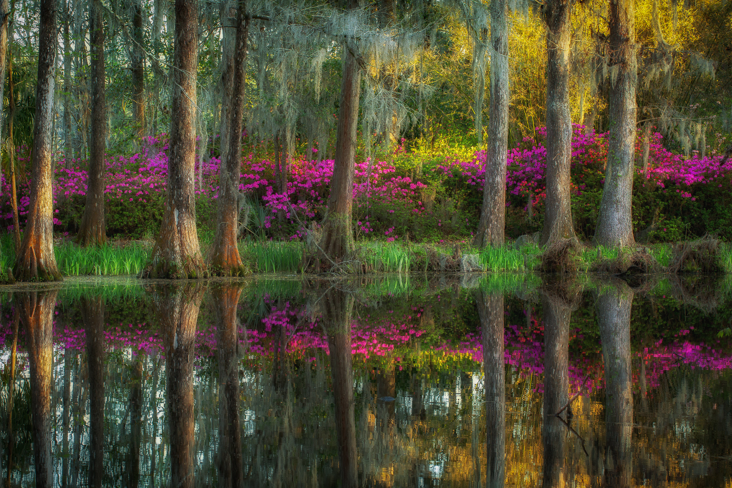 """Reflections of Color"", Historic Middleton Place in Charleston, South Carolina."