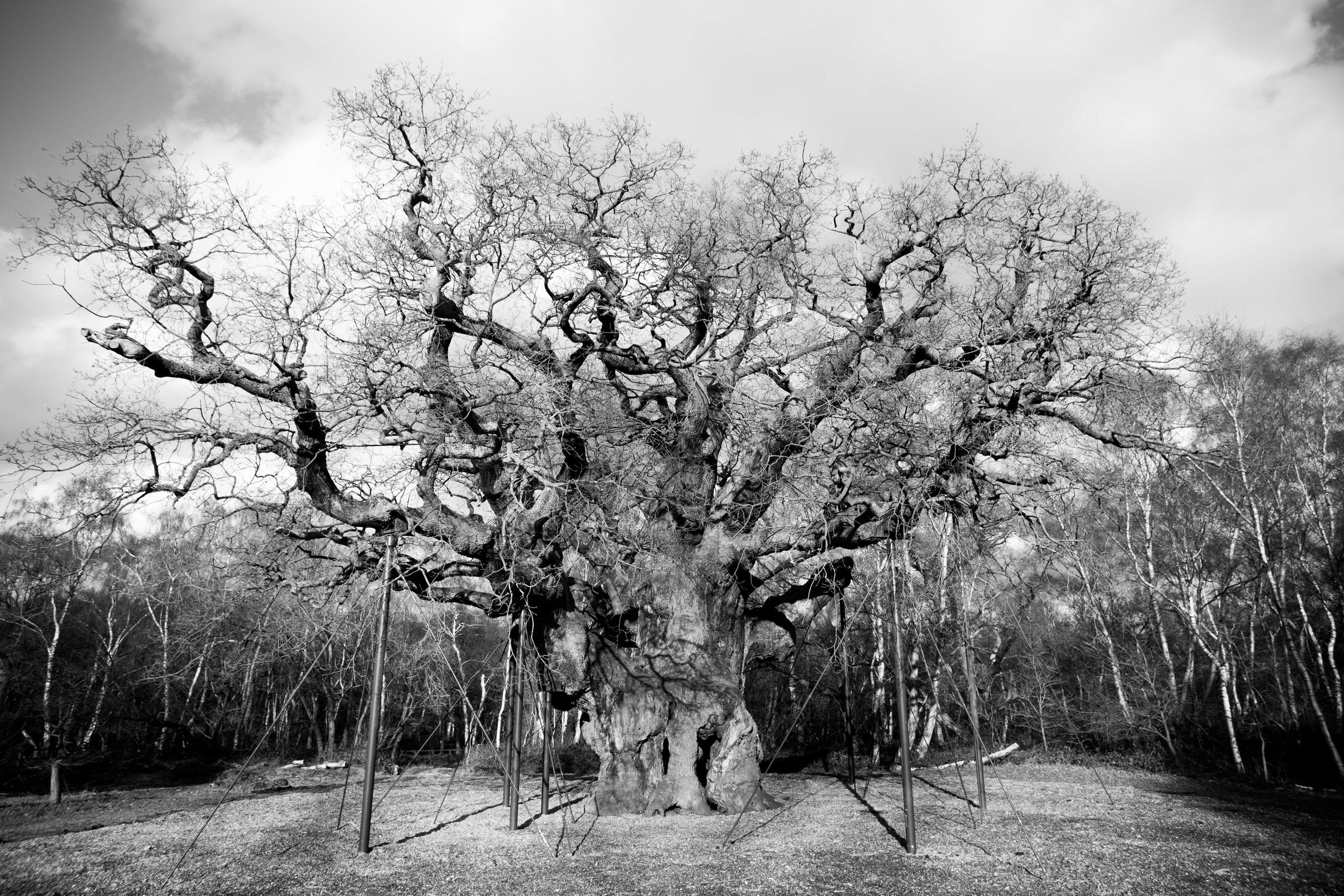 old oak.jpg