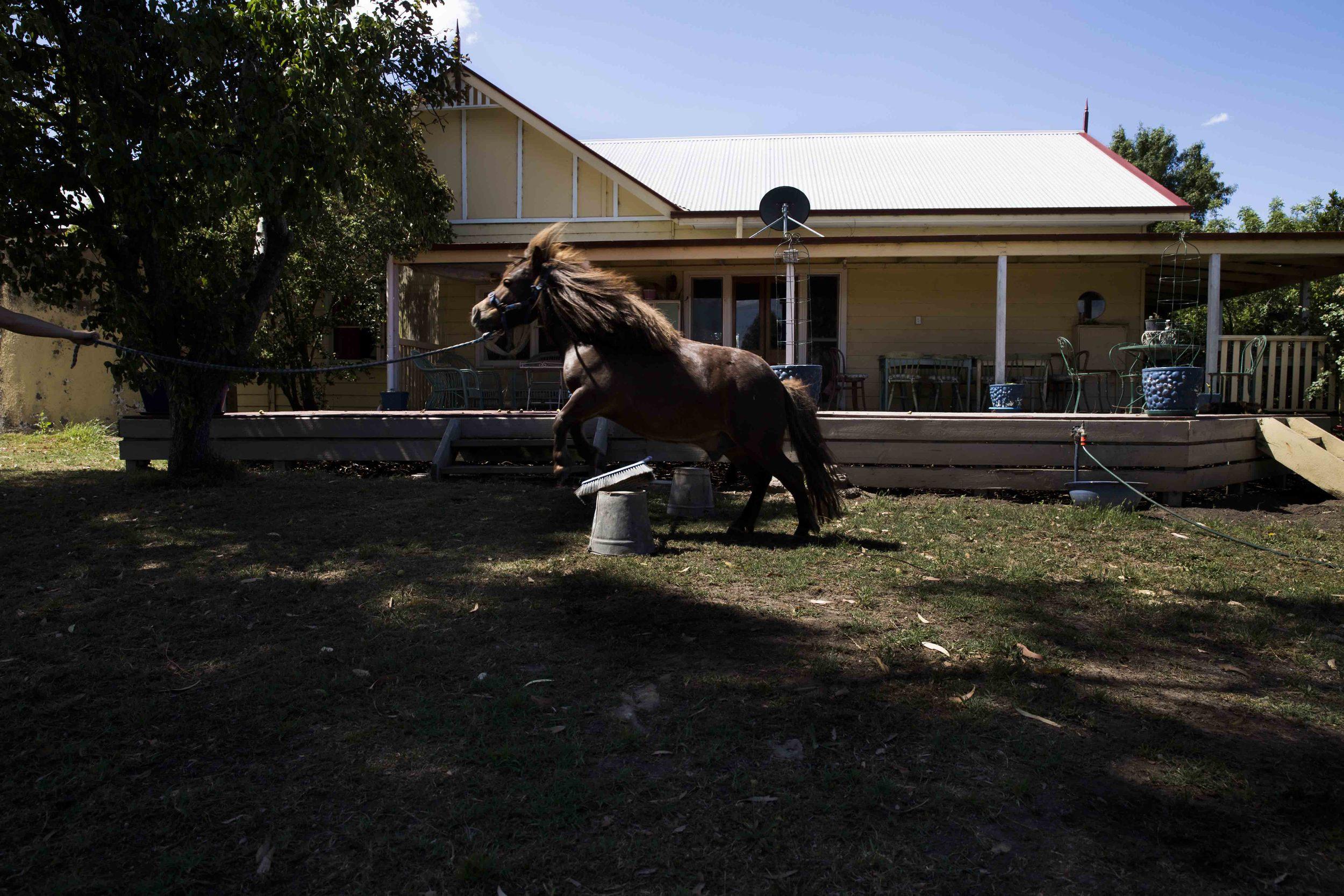 Tiny Horse-2.jpg