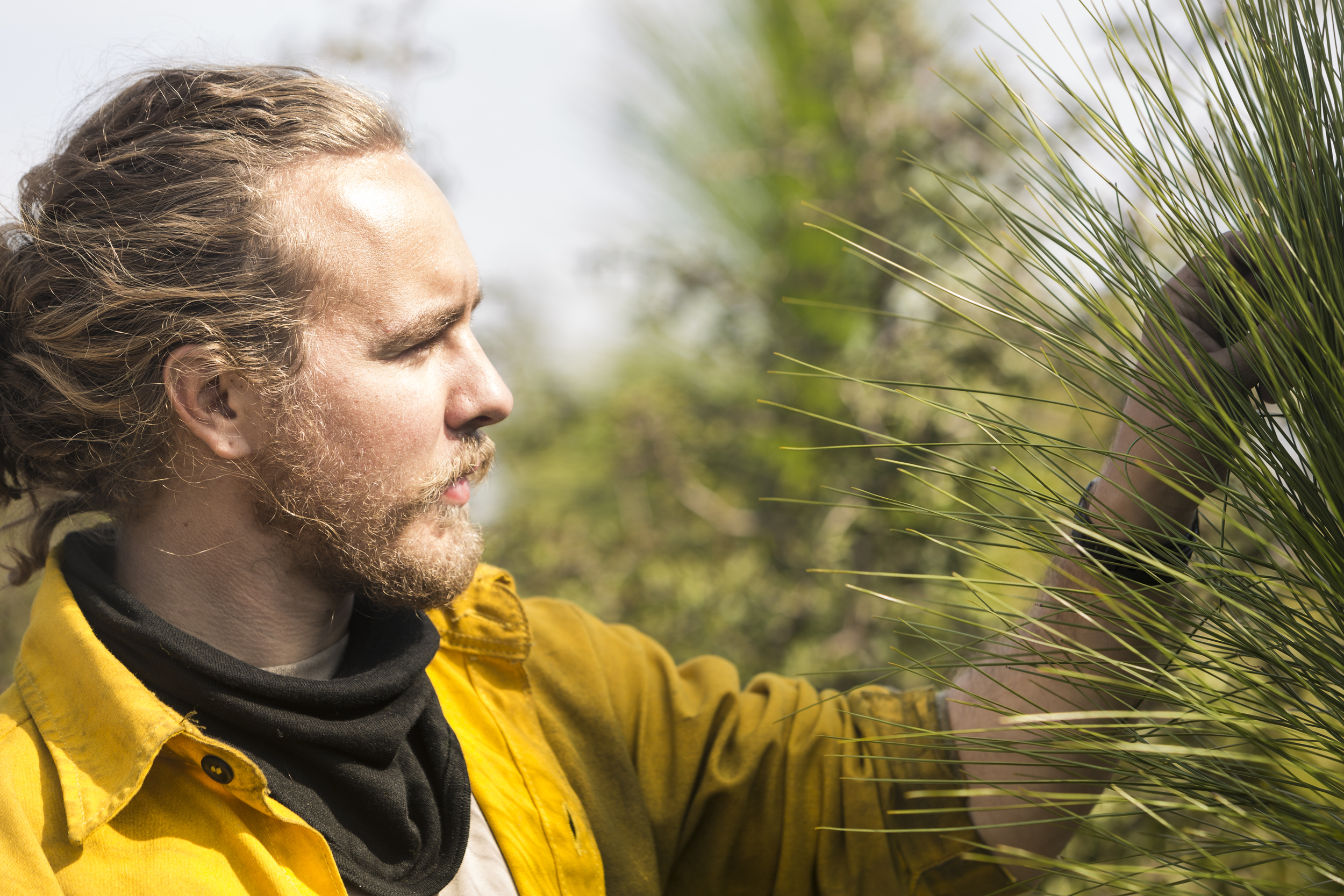 Kottke examining a young Longleaf Pine