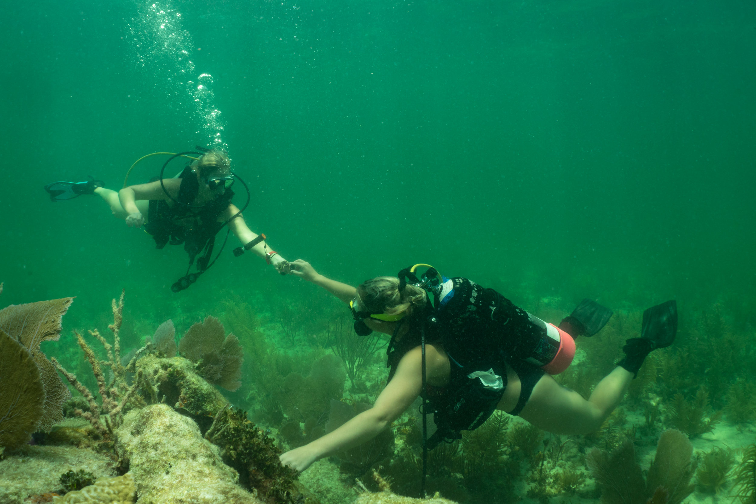 Paige Carper hands Jessica Fair a coral fragment to be secured to the reef.