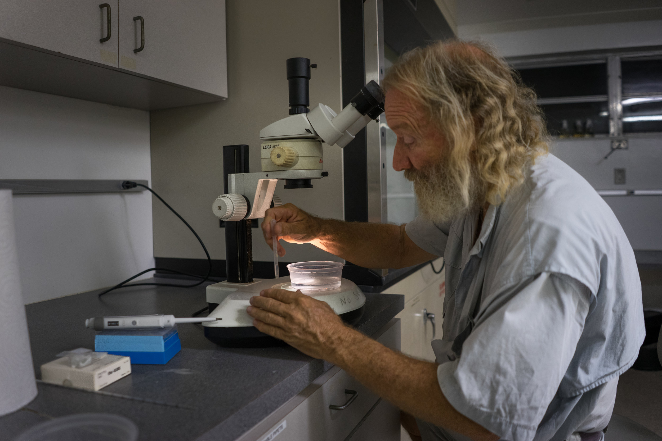 Dr. Dave Vaughan inspecting coral gametes to see if fertilization has occurred.