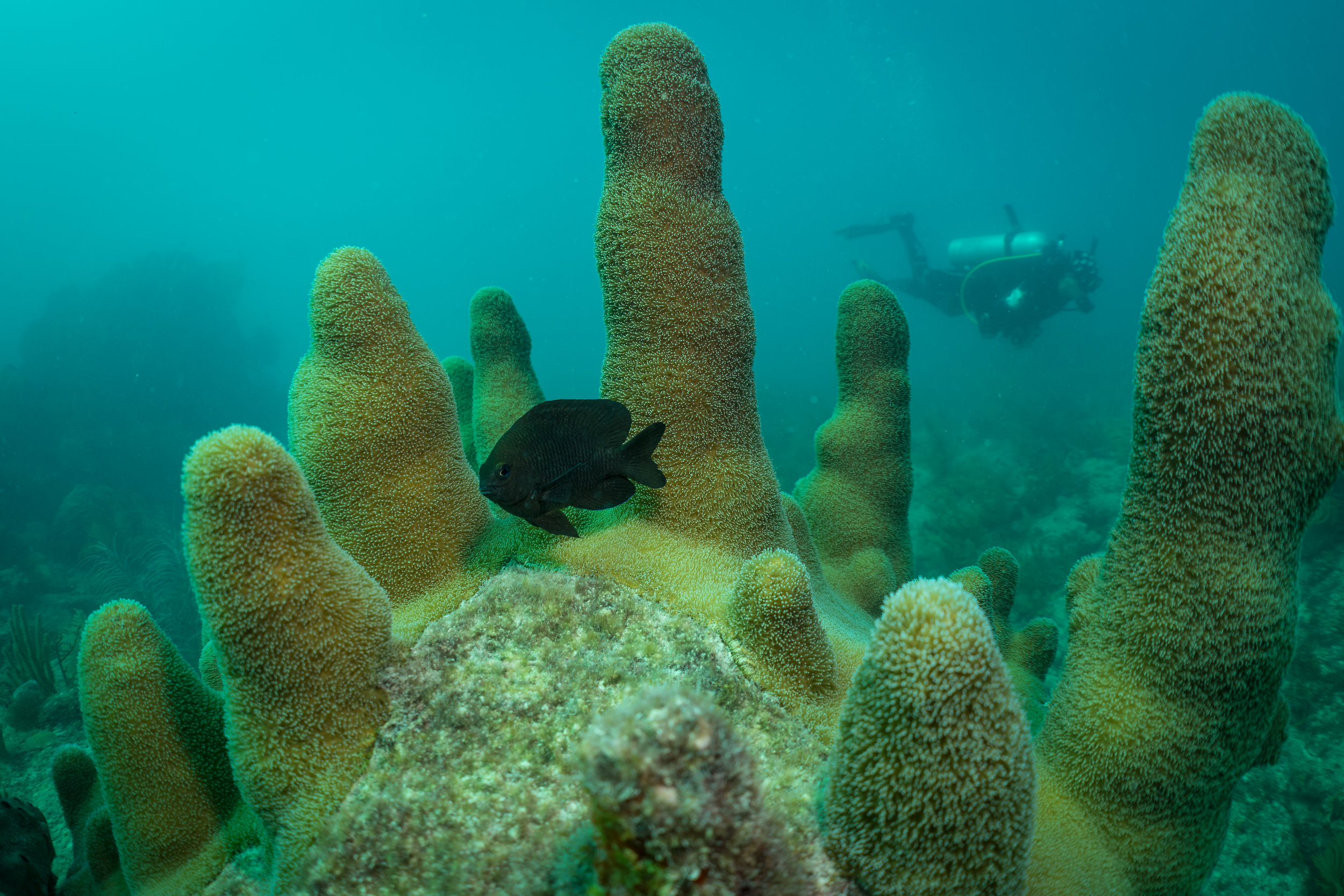 Many fish seek protection between the pillars where larger predators may have a difficult time accessing.