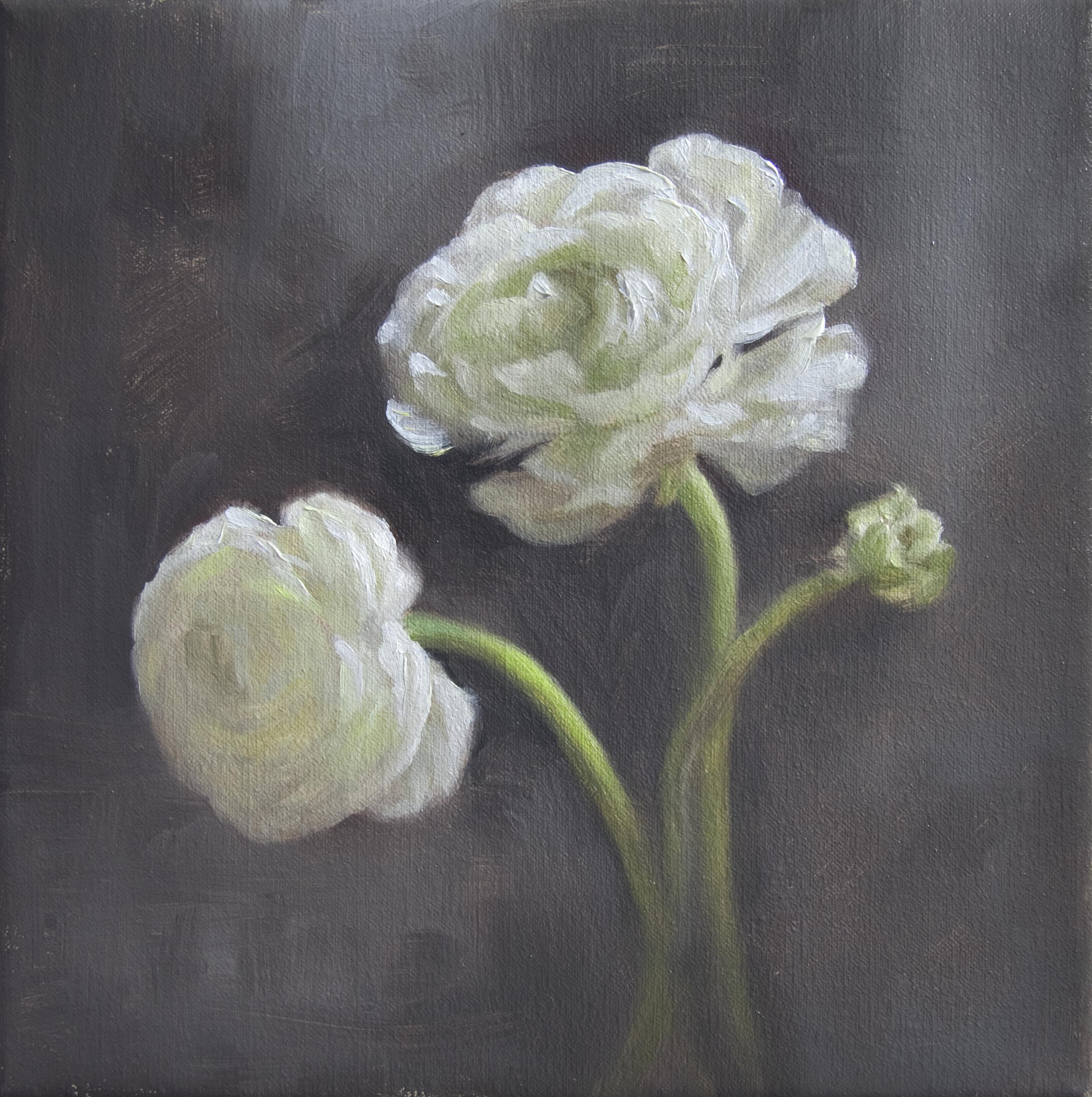 """Winter White Ranunculus   8"""" x 8""""  Oil on Linen   SOLD"""